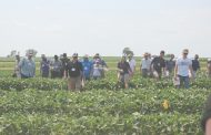 EASTERN ONTARIO: Soil health popular topic at crop diagnostic day