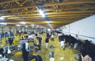 What makes a winning show cow? Ask the experts