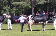 County Kings: Holstein champs named at Eastern Ontario shows