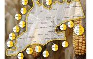 Great Lakes Grains prediction 183 bushel corn, 54 bushel soybeans