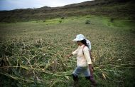 Filipino farmers stand ground against typhoon to protect livestock, crops