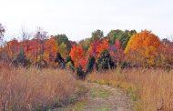 Environment Canada predicting warm harvest season across Ontario