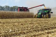 Agricorp offering corn salvage program, paying for high vomitoxin corn