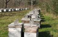 Ontario bee winterlosses down