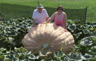 EASTERN ONTARIO: Lindsay couple sets new giant pumpkin record