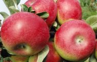 EASTERN ONTARIO: McIntosh apple birthplace up for sale