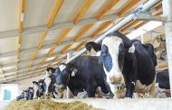 New NAFTA deal a loser for Canadian dairy farmers