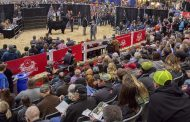 Beef cow sells for six-year high at Royal sale