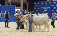 4-H shows include Roslin's Sarah Kay with three big wins