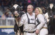 Quebec Holstein cow named Royal supreme champ