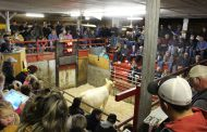 EASTERN ONTARIO: Two heifers sell for $5,500 each at Charolais sale