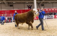 Renfrew County cow wins supreme beef female at Royal