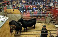 Bad weather, poor beef market hurts Hoard's beef sale