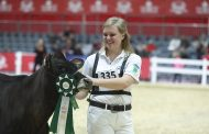 Royal 4-H showperson takes 4 airplane flights to win, write exams