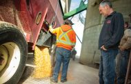 "Horrow show: vomitoxin in corn hitting ""unprecedented levels"" in parts of Western Ontario"