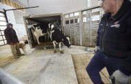 WESTERN ONTARIO: Brothers move from tie-stall to robot barn to appeal to seven growing children