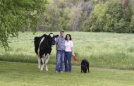 Cow comfort, new barn, learning to spot good genetics help farmer to first Master Breeder shield