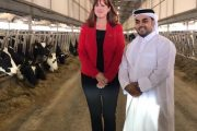 WESTERN ONTARIO: 6,000 dairy cattle arrive at Qatar farm from London Dairy