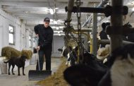 EASTERN ONTARIO: Young dairy farmer left the farm for carpentry — 10 years later, he's back