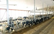 EASTERN ONTARIO: Seven barns hosting open houses for district tour