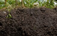 Want profit boost? Get a soil test say agronomists
