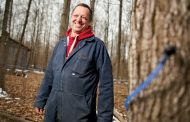 WESTERN ONTARIO: Long, cold winter shortens maple syrup season