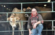 Why everyone loves Jerseys but not enough to give up Holsteins