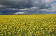 Federal government boosting Advance Payment Program payments to help canola farmers