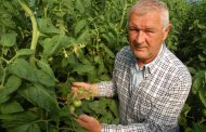 EASTERN ONTARIO: Bureaucratic snag holds up veggie farmer's migrant workers