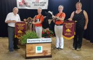 WESTERN ONTARIO: Talking to calf calms nerves for top junior showperson