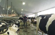 WESTERN ONTARIO: Dairy farmer now has one of the lowest somatic cell counts in Ontario