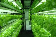 More hype about the future of farming moving indoors