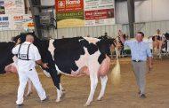 EASTERN ONTARIO: Morrisburg cow wins second show this season