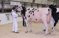 EASTERN ONTARIO: Holstein queens of the counties