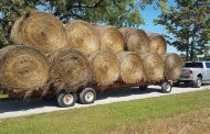 WESTERN ONTARIO: HAY YIELDS VARY WIDELY