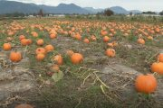 BC Farm says agri-tourism business in trouble with new regulations