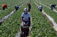 OPINION: US outbreak of COVID-19 among farm workers would be catastrophic