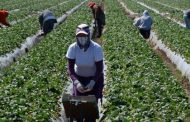 Ontario to inspect farms, greenhouses that hire foreign workers