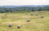 Farmers frustrated with insurance hay payouts