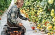 Small farms see huge benefit as large farms face worker shortage in pandemic