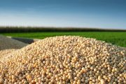 Argentinian farmers sitting on 75 per cent of the soy crop to weaken peso and grow profits