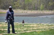EASTERN ONTARIO: Uncertainty hanging over farms waiting for migrant workers