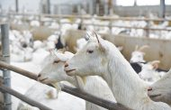 Dairy Farmers of Ontario wants $13 million from Skotidakis Goat Farm