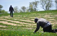 GUEST COLUMN: Ottawa leaves farmers to cover part of worker quarantines