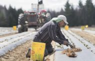 OPINION: Farmers care deeply about their seasonal workers