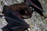 EASTERN ONTARIO: Two bats test positive for rabies, says Eastern Ontario Health Unit