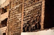 EASTERN ONTARIO: Massive beehive relocated from 120-year old church in Spencerville to Jasper-area farm