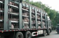Province fast-tracks livestock trucking section of trespassing bill, takes effect Sept. 2