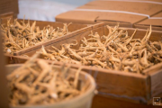 Canadian ginseng piling up despite Chinese demand