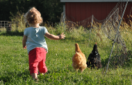 Efforts to make kids safer on the farm have largely failed: study
